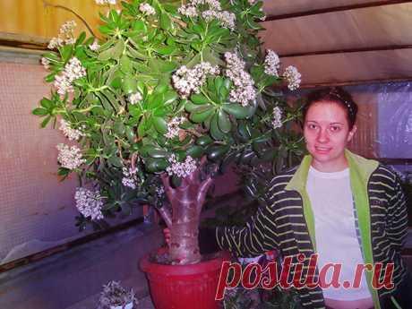 корни денежного дерева фото: 13 тыс изображений найдено в Яндекс.Картинках