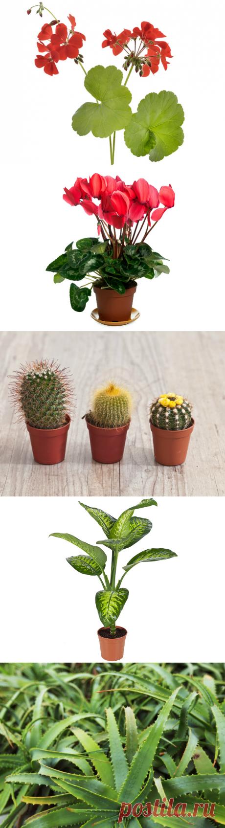 Ядовитые комнатные растения: 10 цветов, которые могут вас убить: nice-westi