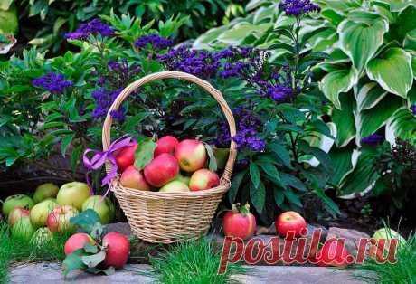 Календарь садовода и огородника на август