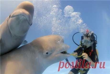 День кита: Прекрасное чудище - Братья наши меньшие - ГОРНИЦА - дайджест новостей, авторские блоги