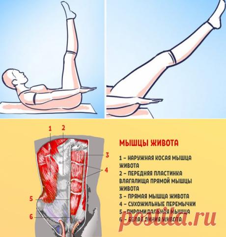 """El ejercicio de oro pilatesa. ¡\""""Los Centenares\"""" para todos los músculos de la cavidad abdominal!"""