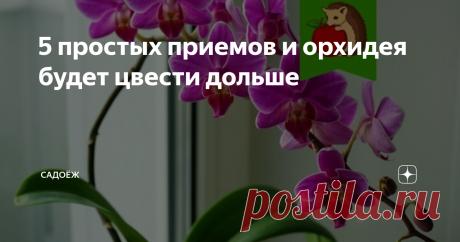 5 простых приемов и орхидея будет цвести дольше Продляем цветение орхидеи до 9-10 месяцев