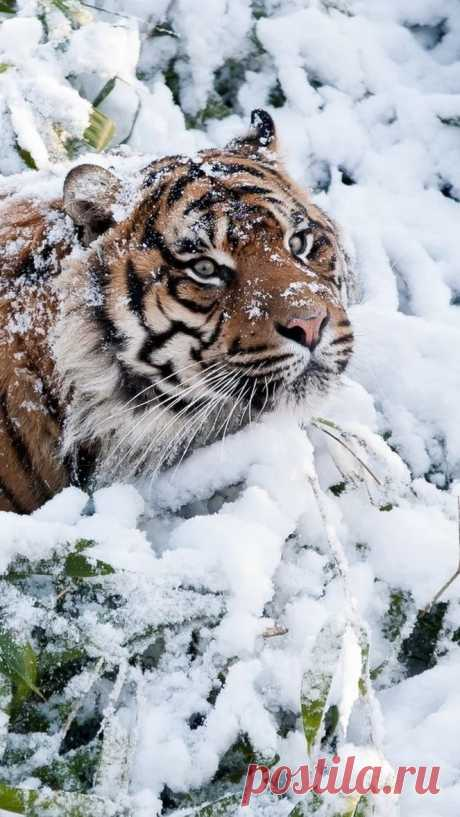 Amazin+wildlife.jpg (663×1178)
