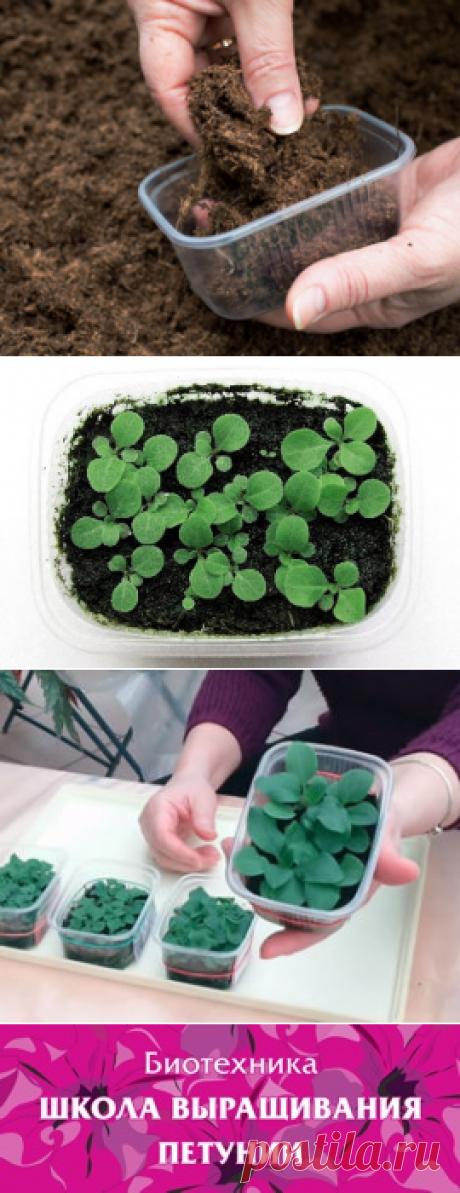 Школа Биотехника, выращивание петунии из семян