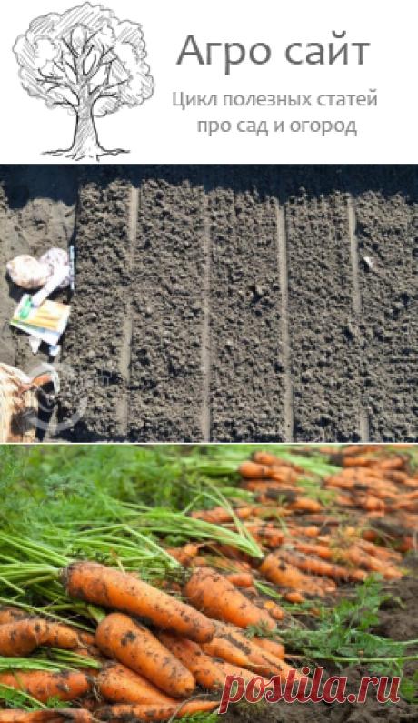 Мульчирование моркови: народный способ борьбы с сорняками и вредителями