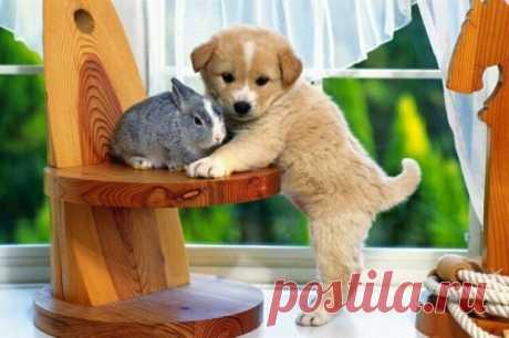 Очаровательные снимки необычной дружбы среди животных