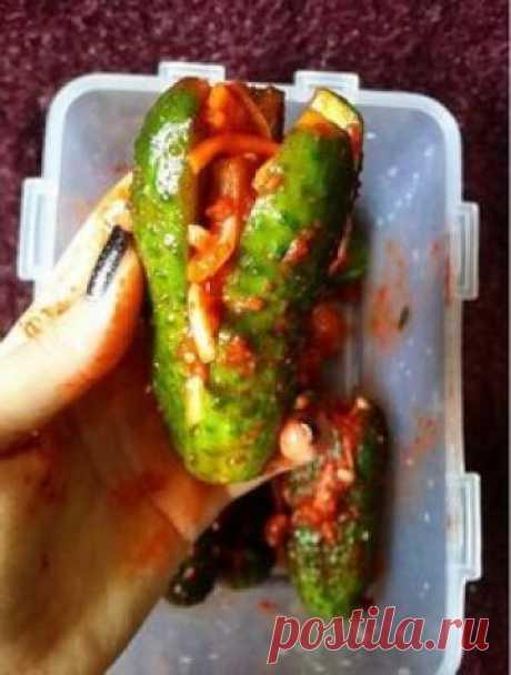 Корейская кухня. Кимчи из огурцов: просто и вкусно.: vilka_logka