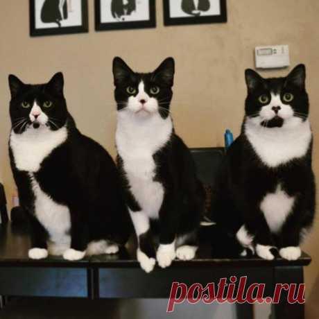 Трио в смокингах