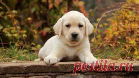 С чего начать воспитание щенка: дрессировка щенков — 7 правил | Краше Всех
