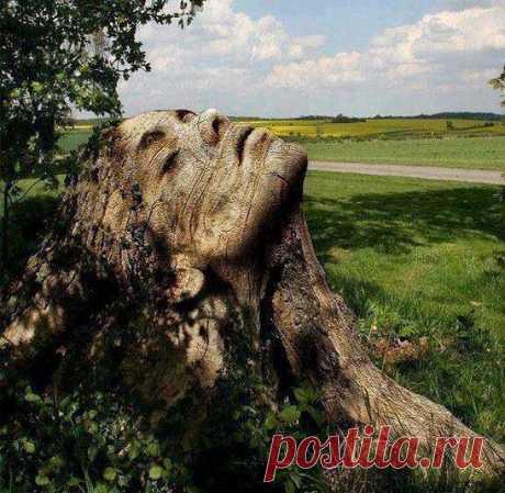 ... вырезано из старого дерева! Оценим?