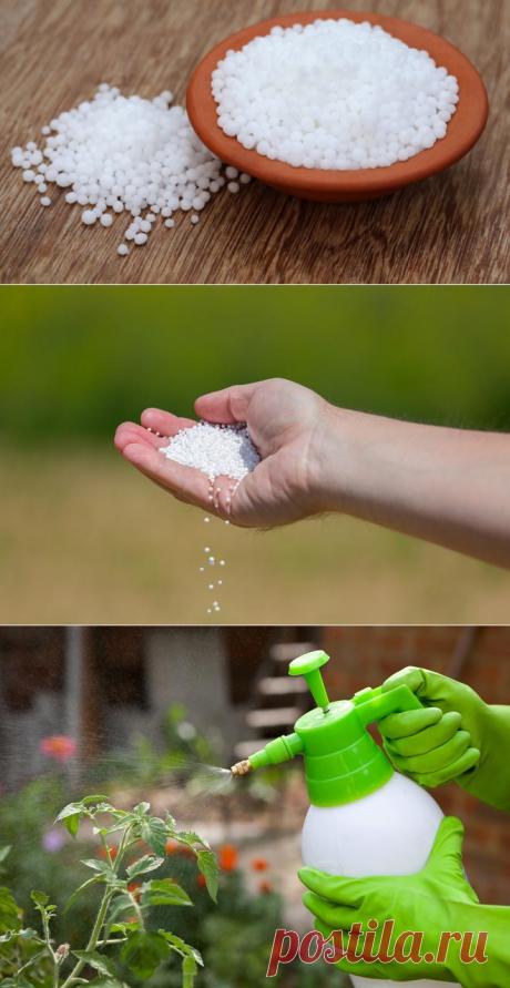 Urea: features of fertilizer and its application