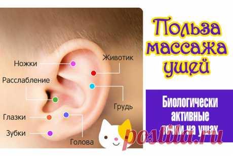 Польза массажа ушей. Биологически активные точки на ушах   Полезные советы