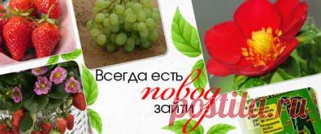 Купить семена почтой в интернет магазине. Каталог семян.