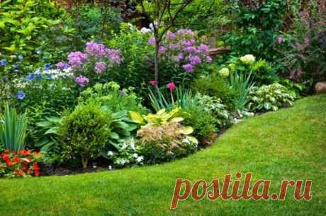 Плотные посадки в пейзажном стиле — «культурные» заросли. Фото — Ботаничка.ru
