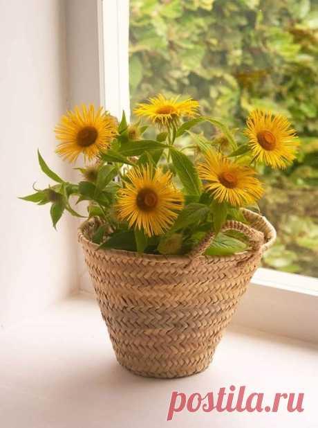 Доброта – это солнце