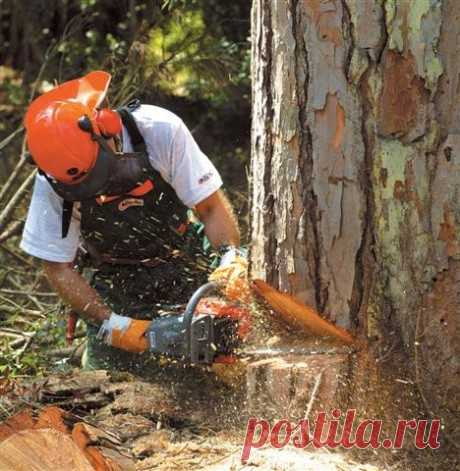 Работа бензопилой: принципы распила древесины и меры безопасности