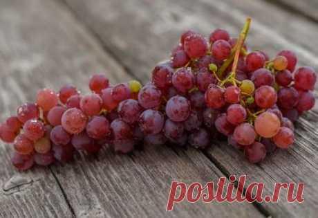 Самый вкусный кишмиш: 5 лучших сортов винограда без косточек Содержание. Лучистый. Юпитер. Канадис. Аттика. Черный палец. В лексиконе виноградарей бытует одна присказка — «кто не пробовал кишмиш, то не знает, что такое виноград». Помимо вкусной сочной мякоти, бескосточковые сорта винограда славятся еще и высоким уровнем сахаристости. Поэтому они прекрасно подходят не только для употребления в свежем виде, но и изготовления вина.
