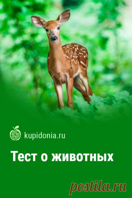 Тест о животных. Интересный познавательный тест о разных животных. Проверьте свои знания!