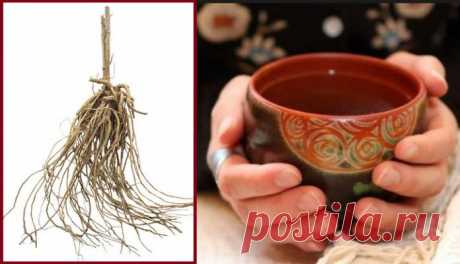 ამ მცენარის ფესვი გამოდევნის მარილებს, კურნავს რევმატიზმსა და ოსტეოქონდროზს, შლის კენჭებს თირკმელში...