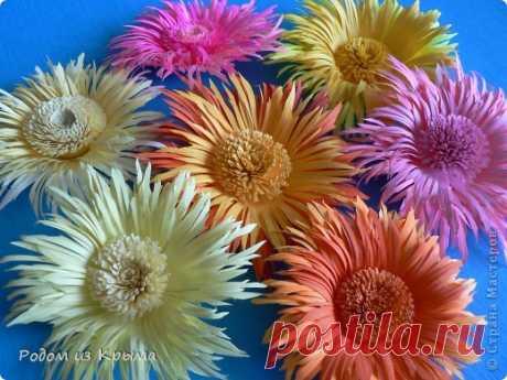 MK de los crisantemos de una manera nueva | el País de los Maestros