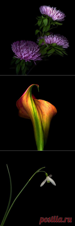 Цветы Магды Индиго