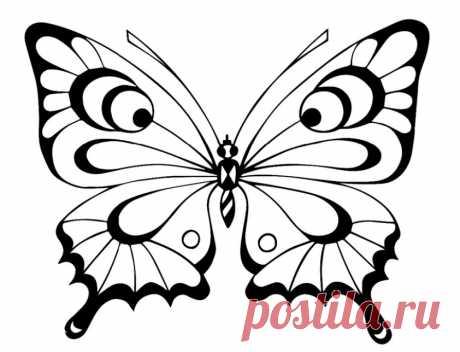 Раскраски бабочки. Бесплатные картинки для детей.   ИЗ БУМАГИ СВОИМИ РУКАМИ