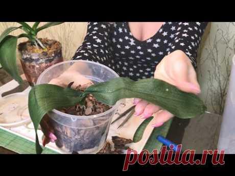 ДЖЕМ Сложная реанимация орхидеи!