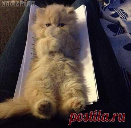 Пуховичек | KotoMail.ru