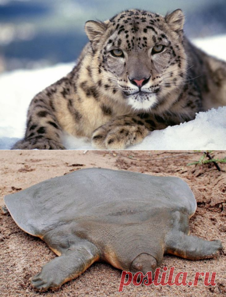 The most rare animals on the planet