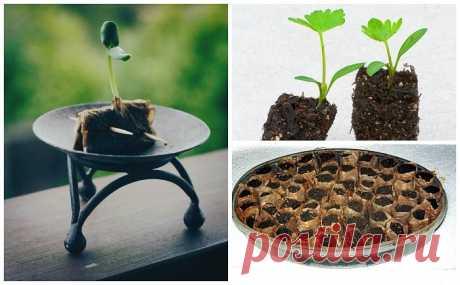 ВЫРАЩИВАНИЕ ПОБЕГОВ В ЧАЙНЫХ ПАКЕТИКАХ- 11 способов повторного применения чайного пакетика