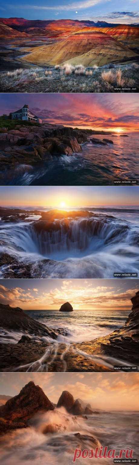 Мир природы Майлза Моргана (21 фото) | Релаксик