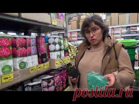 Покупка растений в сетях. Полезные советы при покупке растений для дачи.
