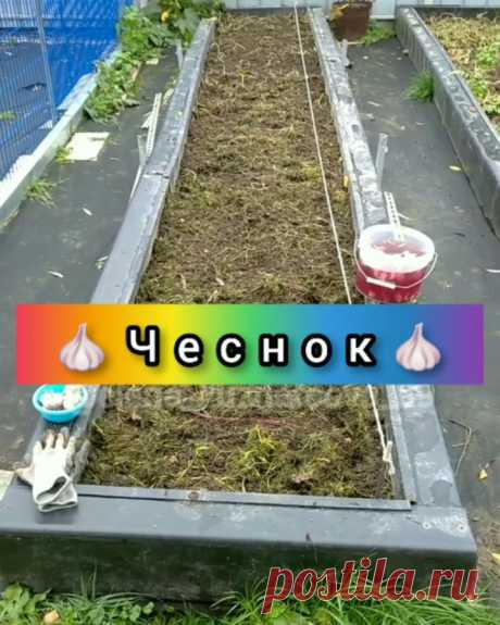 🍒Елена Кузнецова🍒 в Instagram: «💥Сажаю озимый чеснок💥 🔹Полезные советы и идеи для сада и огорода найдёте у ➡️ @elena_kuznetsova_89 🔸Чеснок бывает озимый и яровой. Озимый…»