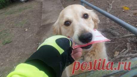 Este perro se amargaba, sin recibir los correos, y el cartero ha comenzado a escribirla las cartas