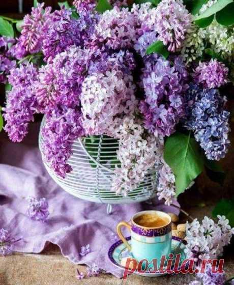 ....Живи с открытою Душой...Всё в этом мире в Божьей власти... Когда Душа - как мир большой, в неё быстрей приходит Счастье... Пусть в жизни всегда будет момент для счастья, повод для улыбки и время для мечты!❤️ Когда у нас красиво в сердце,цветами всё цветёт вокруг!🥀
