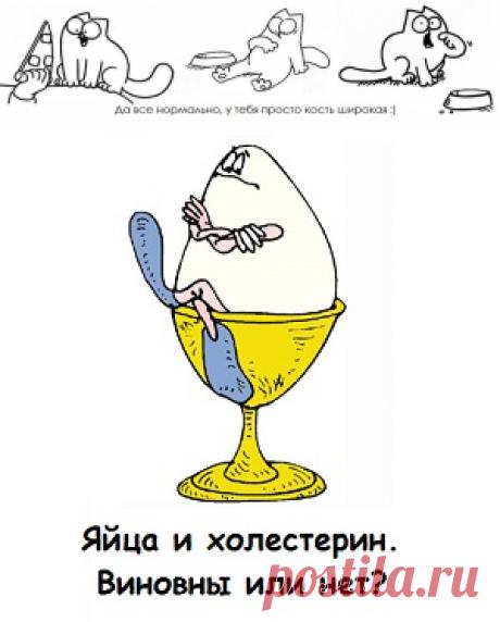 Холестерин в яйцах куриных не влияет на холестерин крови!