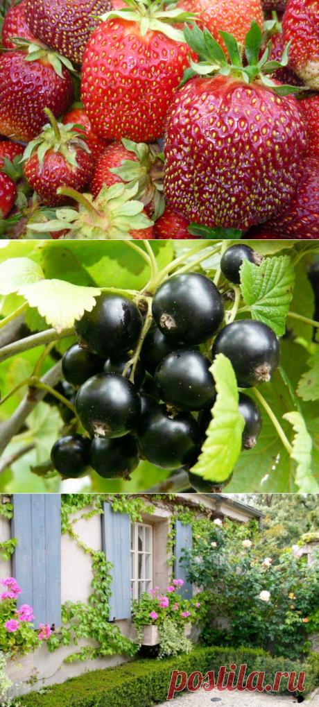 Сад, дача, огород | Olga Pigurska | Фотографии и советы опытных дачников на Постиле