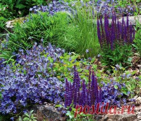 Почвопокровные растения: маленькие феи большого сада