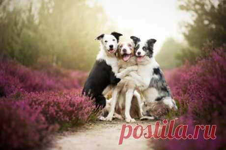 A esta fotopintora joven polaca solamente 19 años, pero hace las forografías estupendas simplemente de los perros, que son atravesadas por el amor grande a los mejores amigos para la persona