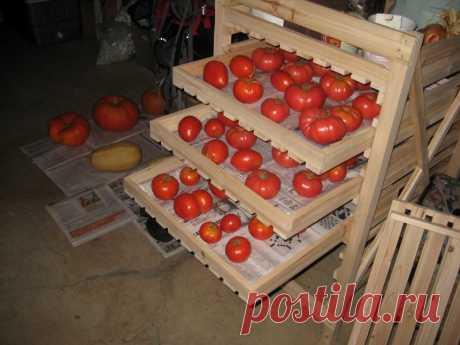 Как хранить помидоры — Полезные советы