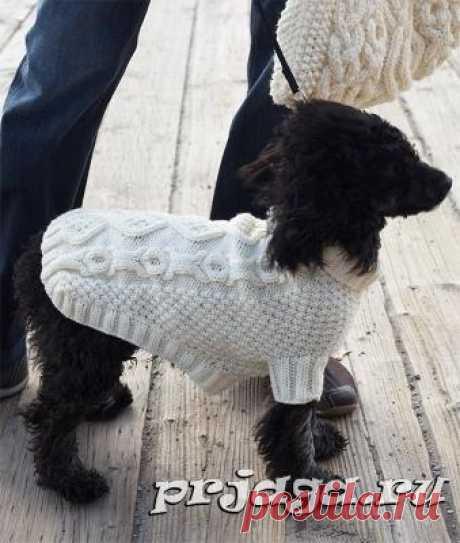 Вязание для собак, кофточка «Печеньки и кости»