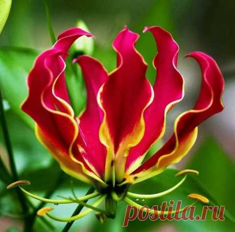 Эти цветы поражают своей необычностью В мире столько разных необычных растений, что даже не верится, что они настоящие. Их красота и необычность поражает. Представляем вам подборку фото необычных цветов, которые существуют на нашей планете. Смотрим!
