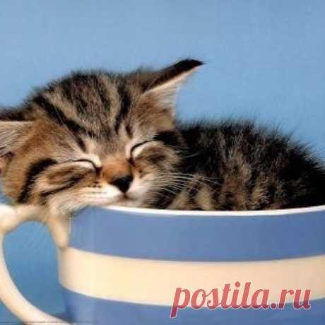 kitten_lover101