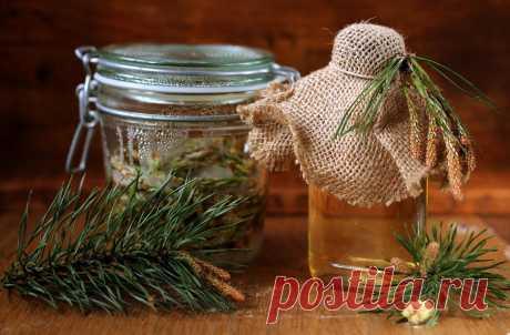 Еловый мед – как панацея от многих болезней