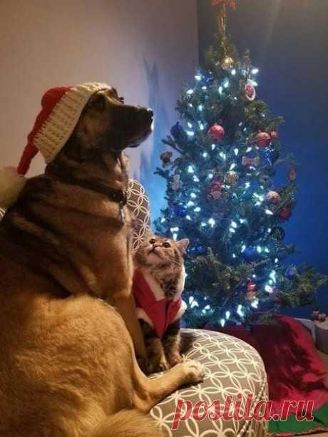 Кот: Ну все? Можно ронять? Пёс: Погоди, фоткать закончат...😉