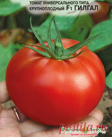 40 килограмм томатов с 1 квадратного метра! Что это за сорт томата? Высокоурожайный и великолепный индетерминантный сорт томата! | Дачная жизнь | Яндекс Дзен