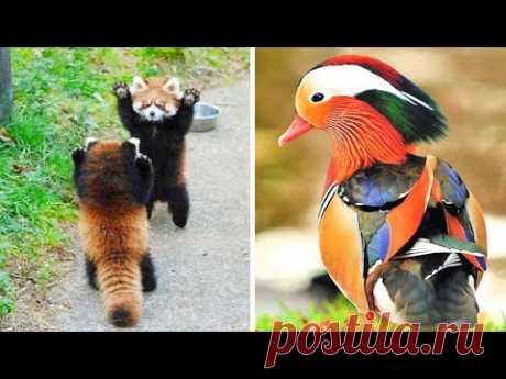 5 Самых милых и красивых животных в мире