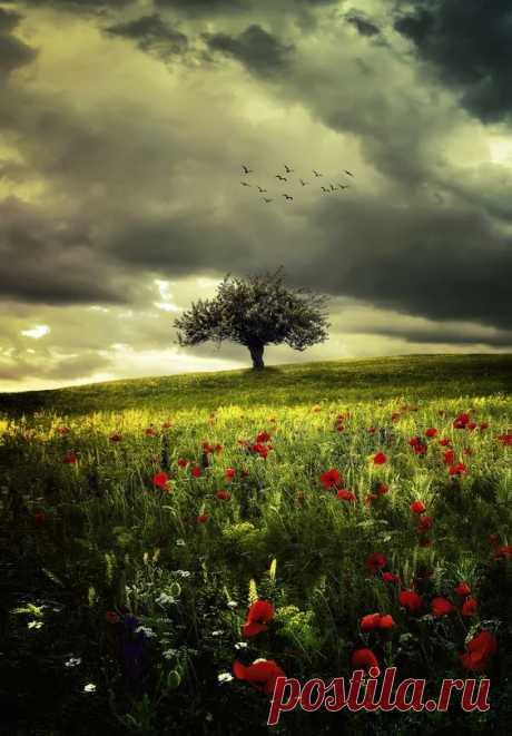 Ein Gewitter zieht auf ... by Bess™ на Fivehundredpx  |  Pinterest • Всемирный каталог идей