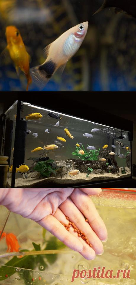 К чему снится Аквариум с Рыбками — 60 значений сна для женщин и мужчин