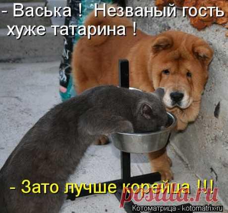 Котоматрица: -Васька !  Незваный гость  хуже татарина !